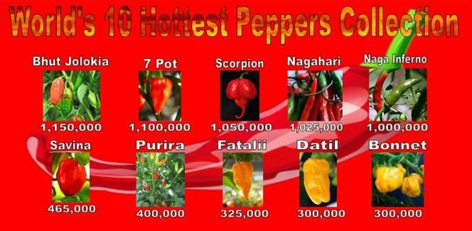 Hottest Pepper In The World Images